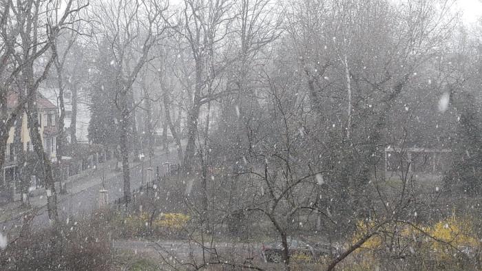 Schneefall in Frühling